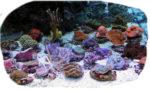 MT Aquaristik